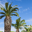 Palms along a road in Gruissan - Stock Photo
