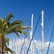 Stock Photo: Sail masts and palm trees