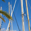 Sail masts and palm trees - Stock Photo