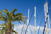 Sail masts and palm trees — Stock Photo