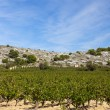 Stock Photo: Vineyard in south france