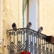 Pigeons on a balcony railing — Stock Photo