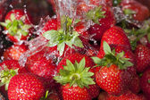 Ripe red strawberries under a water jet — Stock Photo
