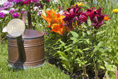Watering can in front of colorful lilies — Stock Photo