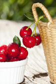 Freshly picked cherries from the garden — Stock Photo