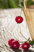 Dojrzałe wiśnie w kosz — Zdjęcie stockowe