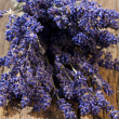 A bunch of freshly harvested lavender flowers — Stock Photo