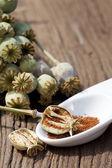 Makové kapsle a semena v létě — Stock fotografie