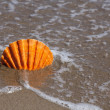 Orange Scallop Shell stuck in Sand Beach — Stock Photo