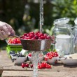 Cherry liqueur manufacturer, cherries washing — Stock Photo #40273981