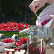 Stock Photo: Fill pitted cherries in canning jar