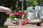 Cherry liqueur manufacturer, cherries washing — Stock Photo