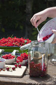 Fill pitted cherries in a canning jar — Stock Photo