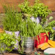 Herbs in pots on a wooden table — Стоковое фото