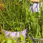 Many fresh garden herbs — Stock Photo