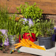 Various herbs in pots on a wooden table — Stockfoto