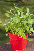 Red herb pot with oregano — Stock Photo