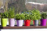 Fresh herbs on the Balcony — Stock Photo