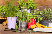 Various herbs in pots — Stock Photo