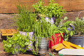 Herbs in pots on a wooden table — Stock Photo
