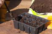 在小塑料厂托盘的盆栽土壤 — 图库照片