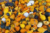 Many colorful pumpkins — Stock Photo