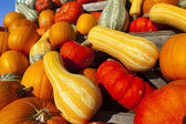 Many different ornamental gourds — Stock Photo