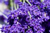 макросъемки цветки лаванды — Стоковое фото