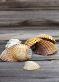 Seashells from the Mediterranean — Stock Photo
