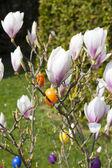 Bush bella magnolia con decorazione di Pasqua — Foto Stock