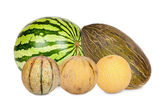 Five Different varieties of melons — Stock Photo