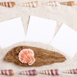 Sand background with blank instand photos and shells — Stock Photo #51297943