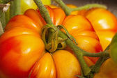 Close-up of large beefsteak tomatoes — Stock fotografie