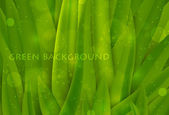 Background of green grass, summer background — Vettoriale Stock