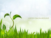 Background of green grass, summer background — Stock Vector