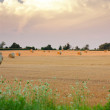 Hay bales in field wide expanse - Stock Photo