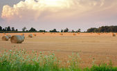 Hay bales in field wide expanse — Stock Photo