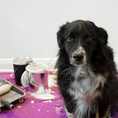 Dog gets into painting project — Stock Photo