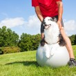 Stock Photo: Training dog on Yogball