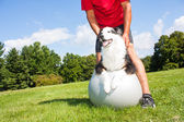 Training dog on Yoga ball — Stock Photo