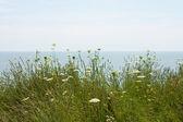 Fiori di campo sul lago — Foto Stock