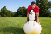 Yoga-Ball-Hundetraining — Stockfoto