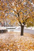 Snowy fall tree — Stockfoto