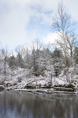 Frosty winter scene vertical — Stock Photo