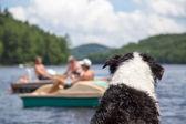狗手表在湖上的活动 — 图库照片