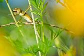 Closeup to little lizard — Stock Photo