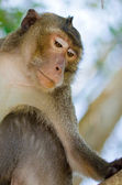 Thailand monkey — Stockfoto