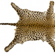 Leopard fur full body for background — Stock Photo