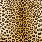 Closeup real tiger fur — Stock Photo #36837349
