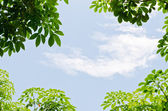 Green leaf with nature sky — Stock Photo